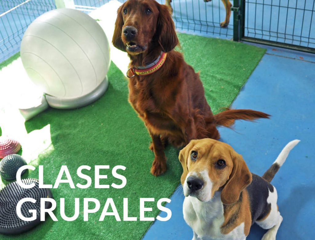 clases-grupales-adiestramiento-canino