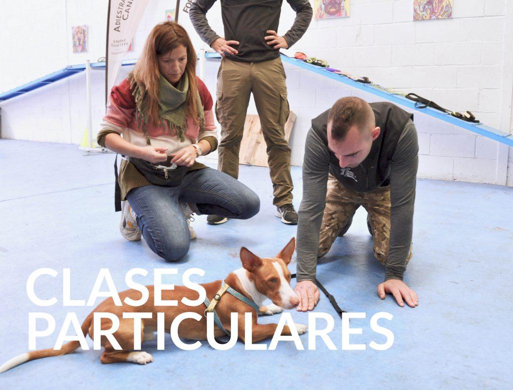 clases-particulares-adiestramiento-canino-gaspar-quintero