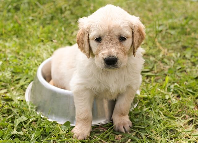 5 Características Que Tienen Que Poseer Los Perros Guías Lazarillos