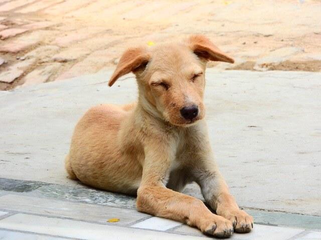 gaspar adiestrador canino cachorro de perro sin raza
