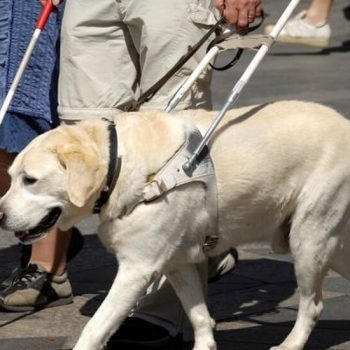 perro guia gaspar adiestrador canino