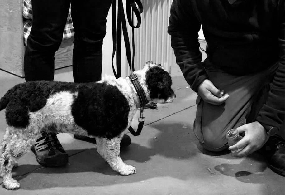 curso de detección de sustancias canina