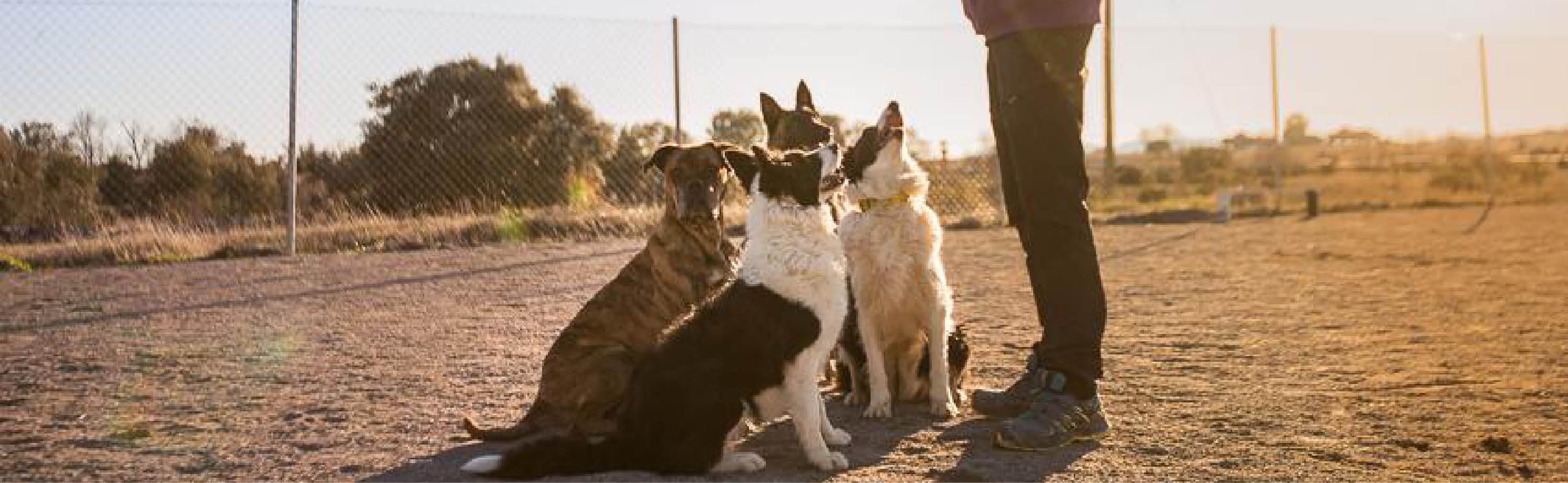 taller-iniciacion-perros-trabajo-cabecera